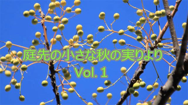 庭先の小さな秋の実りよりVol.1