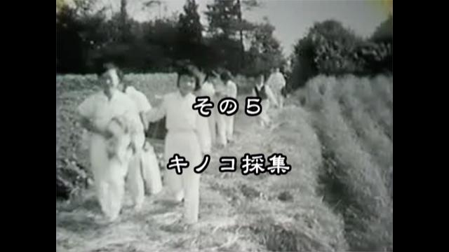 新田小その5 きのこ採集