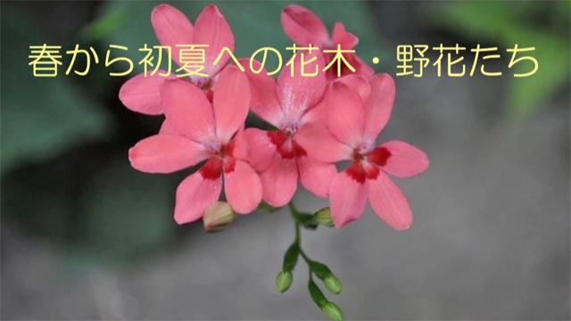 春から初夏への花木野花たち