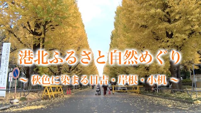 秋色に染まる日吉・岸根・小机