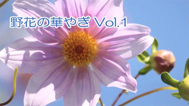 野花の華やぎVol.1